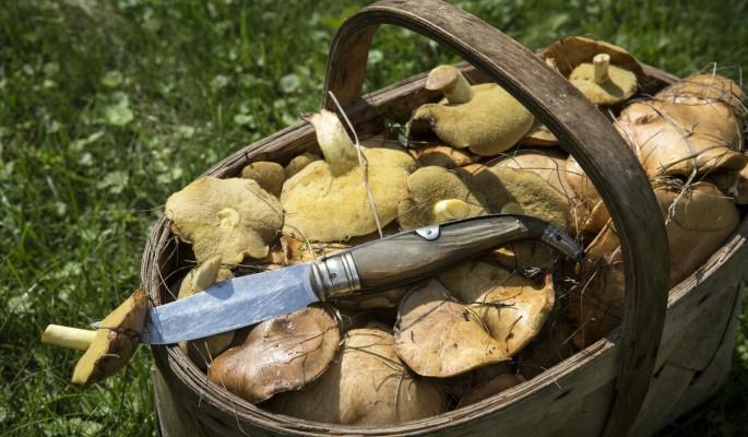 Домашние грибные заготовки приводят к смерти