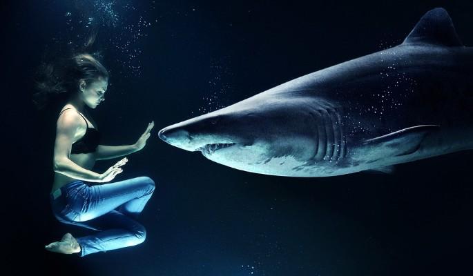 В Сети появилось видео встречи студентки с акулой-людоедом