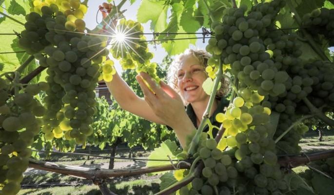Володин: Закон о виноделии могут принять 18 декабря