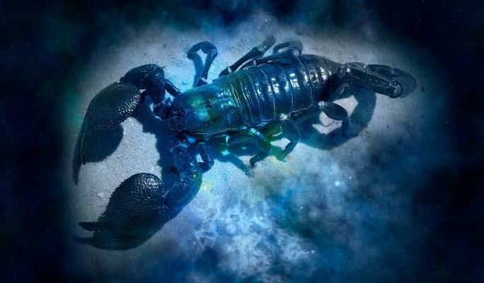 Гороскоп совместимости: Скорпион с другими знаками зодиака