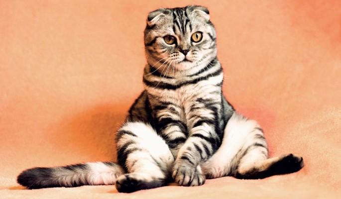Ермилов день: зачем сидеть дома и следить за кошками 26 января