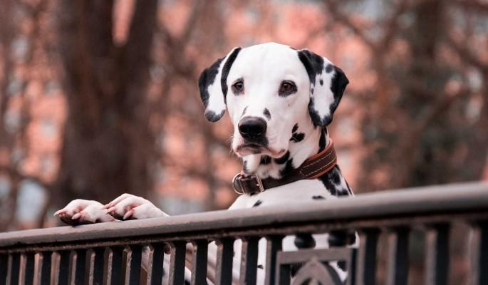 Покупает собак и разделывает на мясо: жуткие подробности зверств живодера из Приморья