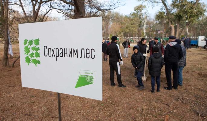 """Участники акции """"Сохраним лес"""" высадили 40 млн деревьев"""