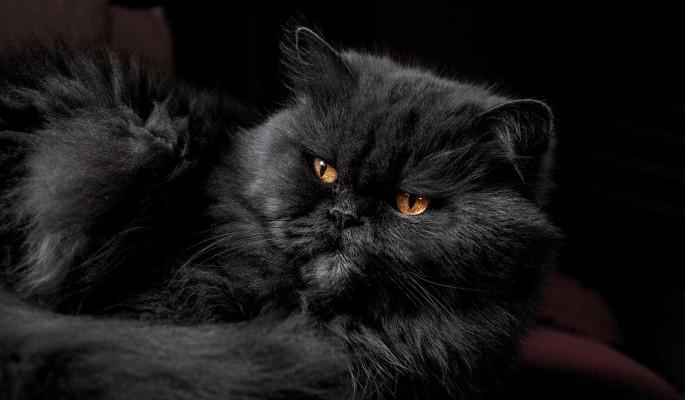 Совершивший миграцию кот Иван из России устроил переполох в Великобритании