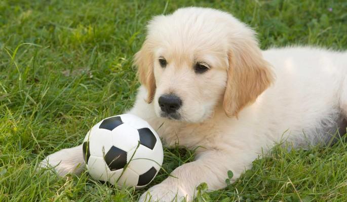 Игривый пес выбежал на футбольное поле и прервал матч