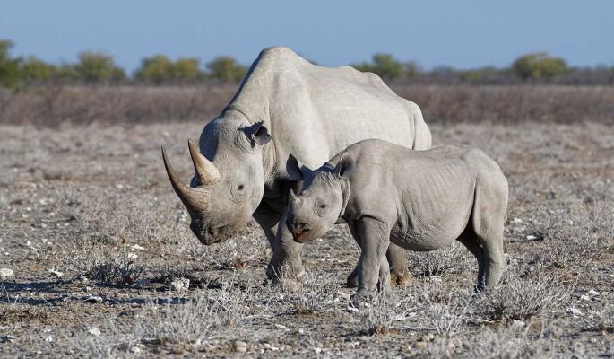 """""""Росатом"""" спасает носорогов: завершился первый этап проекта Rhisotope"""