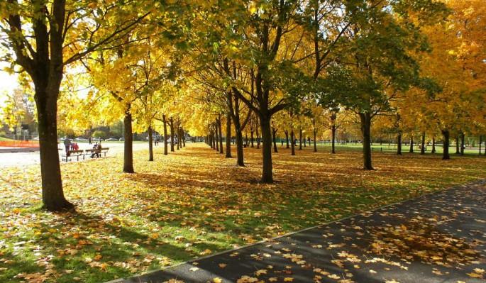 День Иона и Фока – Листопадная: Что нельзя делать 5 октября